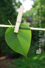 حفظ محیط زیست برای آیندگان